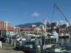 Port de Hobart - Mt Wellington