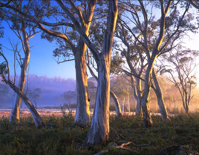 Snowgums--lake-St--Clair-Photos-Rob-Blaker
