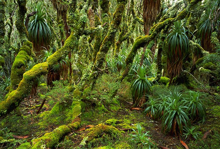 South-west-rainforest-Photo-RTob-Blaker