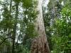 Forêt Huon Vallée